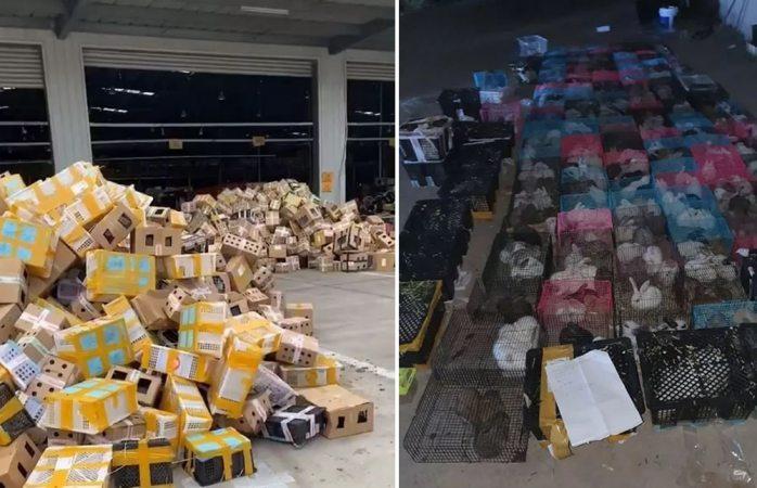 Dejan morir 5 mil animales dentro de cajas para envíos