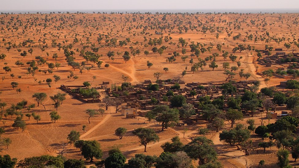 Sorprendente hallazgo: Millones de árboles en medio del desierto del Sahara