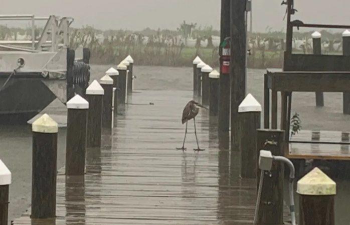 Video: huracán zeta toca tierra en luisiana