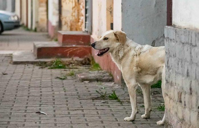 Pasea perro en celaya con pierna humana en el hocico
