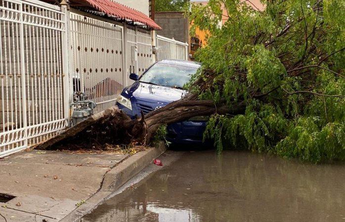 Cae árbol sobre vehículo al sur de la ciudad