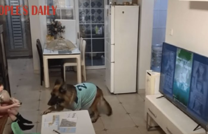 Captan video de perro alertando a niña