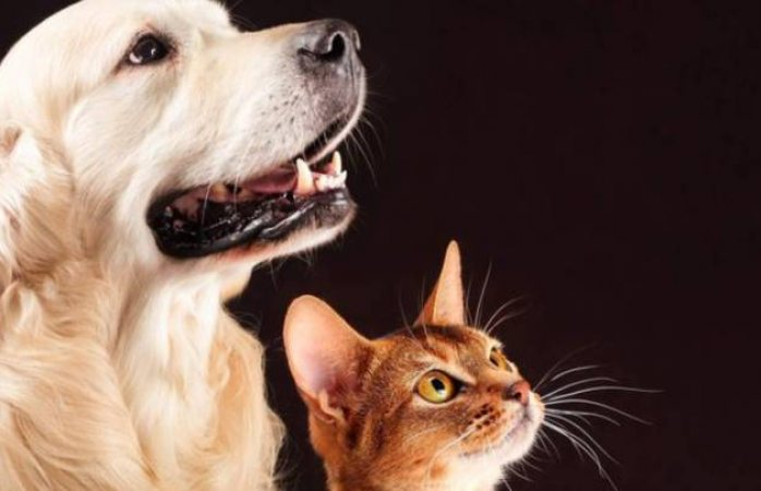 Mascotas pueden contagiarse de coronavirus