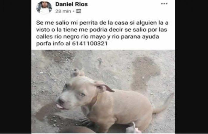 Piden ayuda para encontrar a perrita