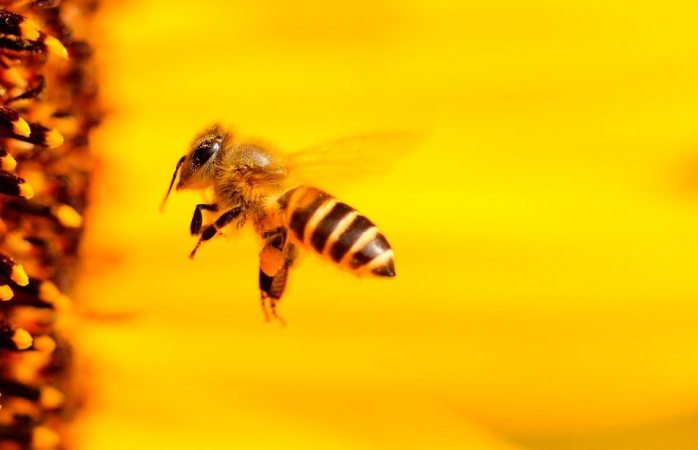Veneno de abejas ayuda a atacar células de cáncer de mama: estudio