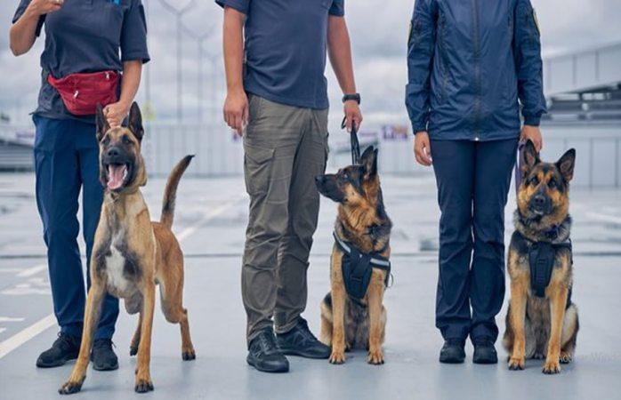 Emplea aeropuerto de helsinki perros para detectar covid 19