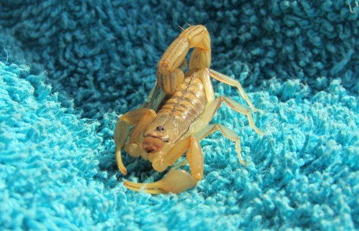 Compra bolsa en china y le llega con ¡escorpión!