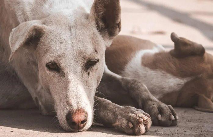 Propone morena hasta 5 años de cárcel por maltrato animal
